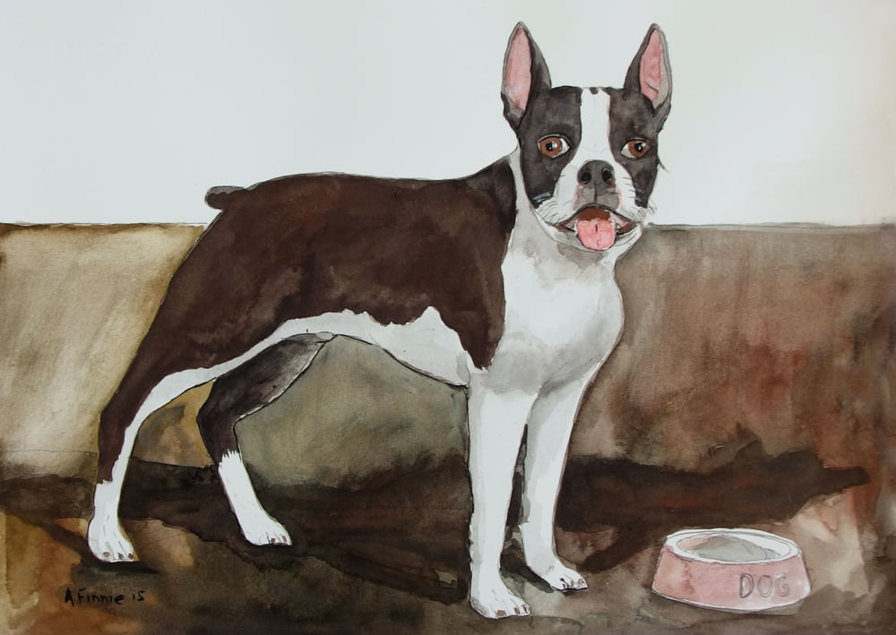 Andrew Finnie_BostonTerrierWithDogBowl_watercolour on archers.jpg