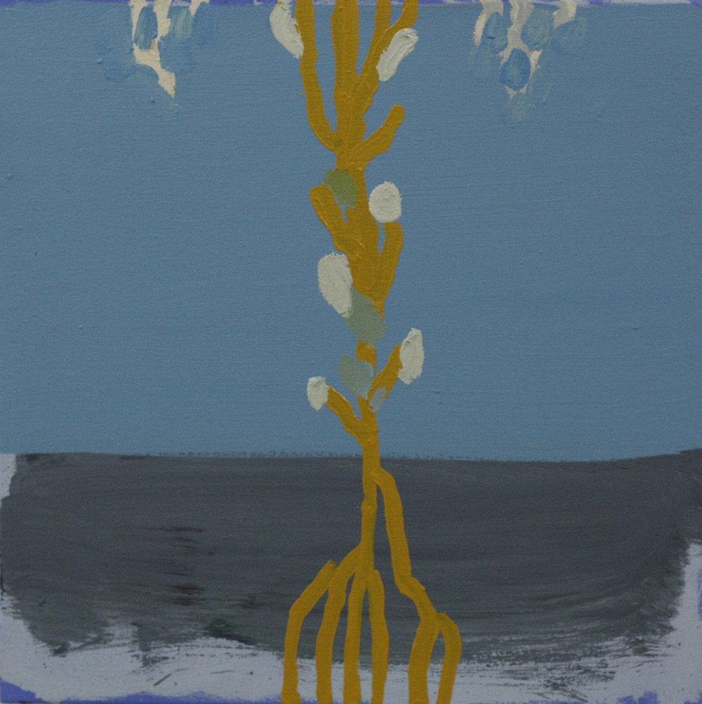 Matthew Tome Blossom 2017 oil on canvas 56x56cm $650.00