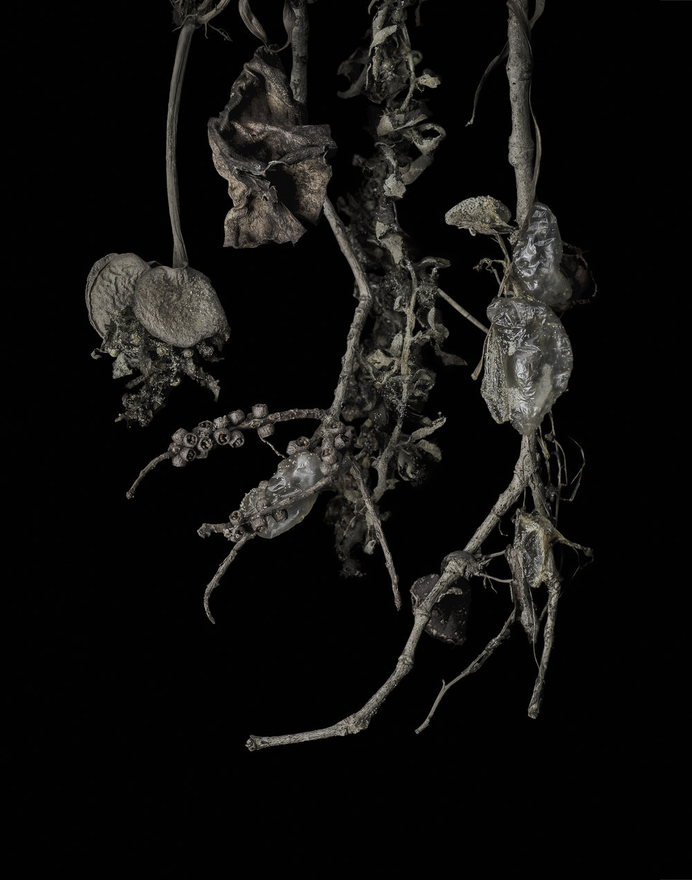 Clare Hodgins, Fig. 57, 2018, photograph on cotton rag paper, 26 x 20cm.jpg