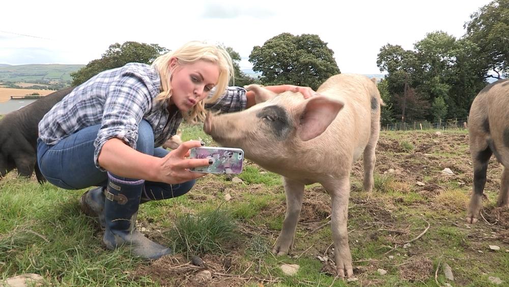 Pigs2 - Pig Selfie.jpg