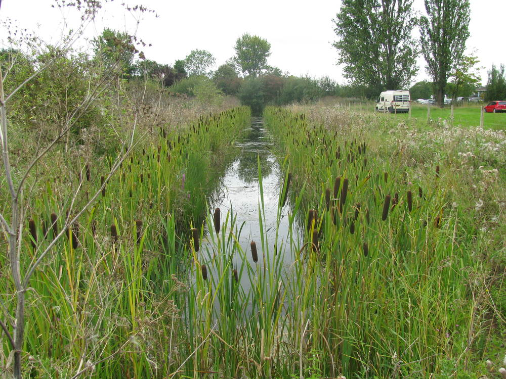 Car park SuDS and watervole habitat