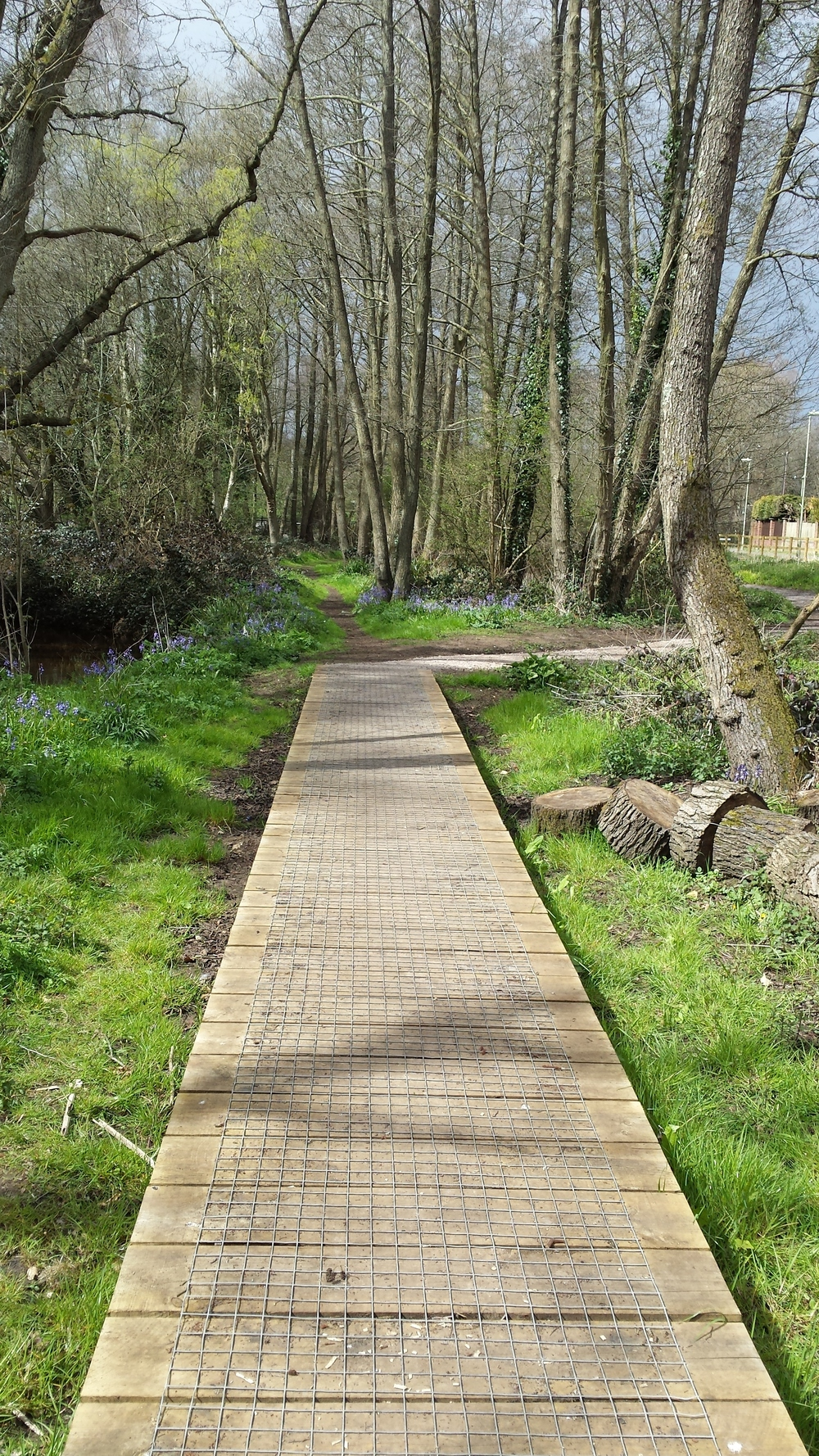 Boardwalk on local nature reserve