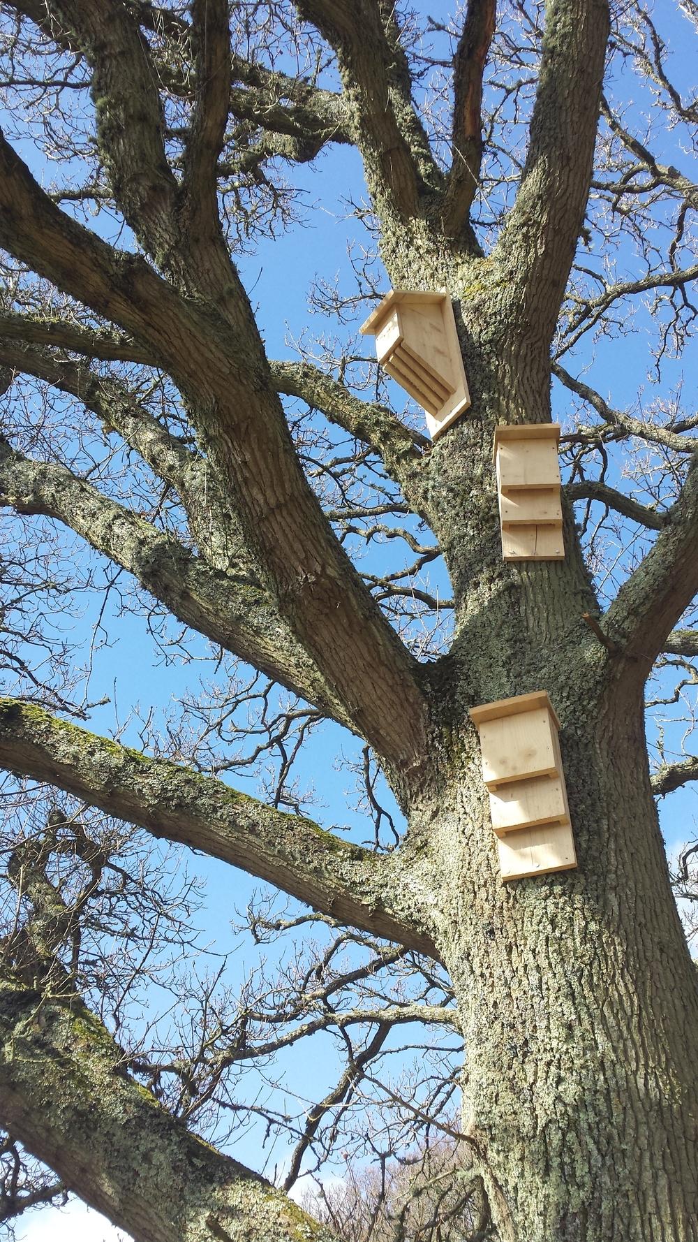 Bat box installation