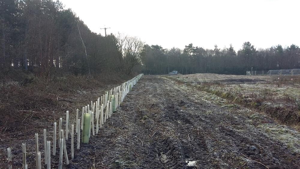 Hedgerow establishment as visual screening on a development