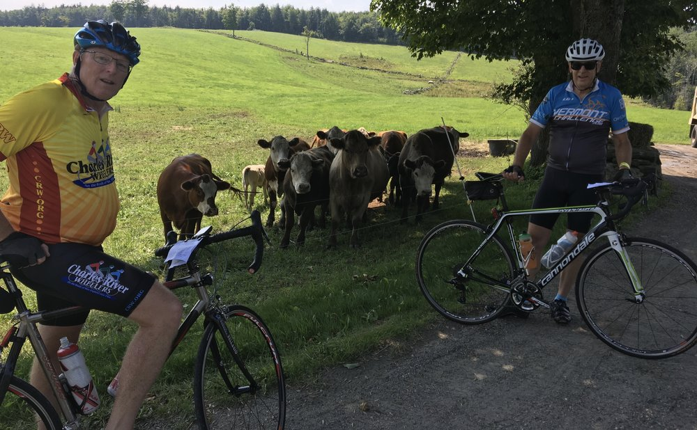 Meeting the locals along VT 100