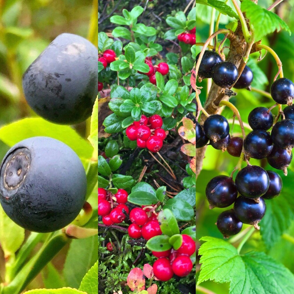 lingonberry bilberry blackcurrant