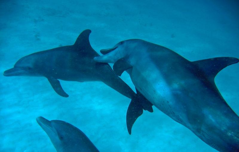 Guludo Dolphins 01.jpg