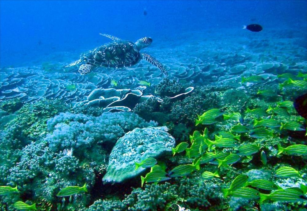 Scuba Diving Zala.jpg