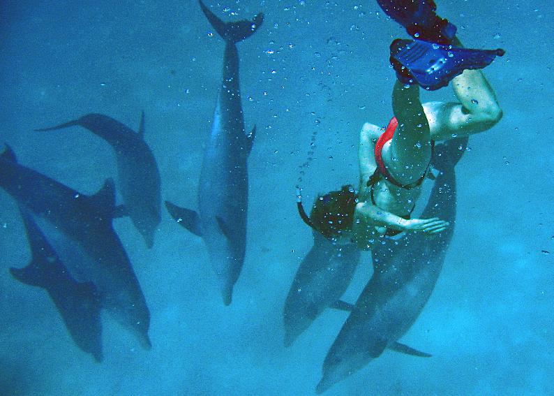 Guludo Dolphins 02.jpg