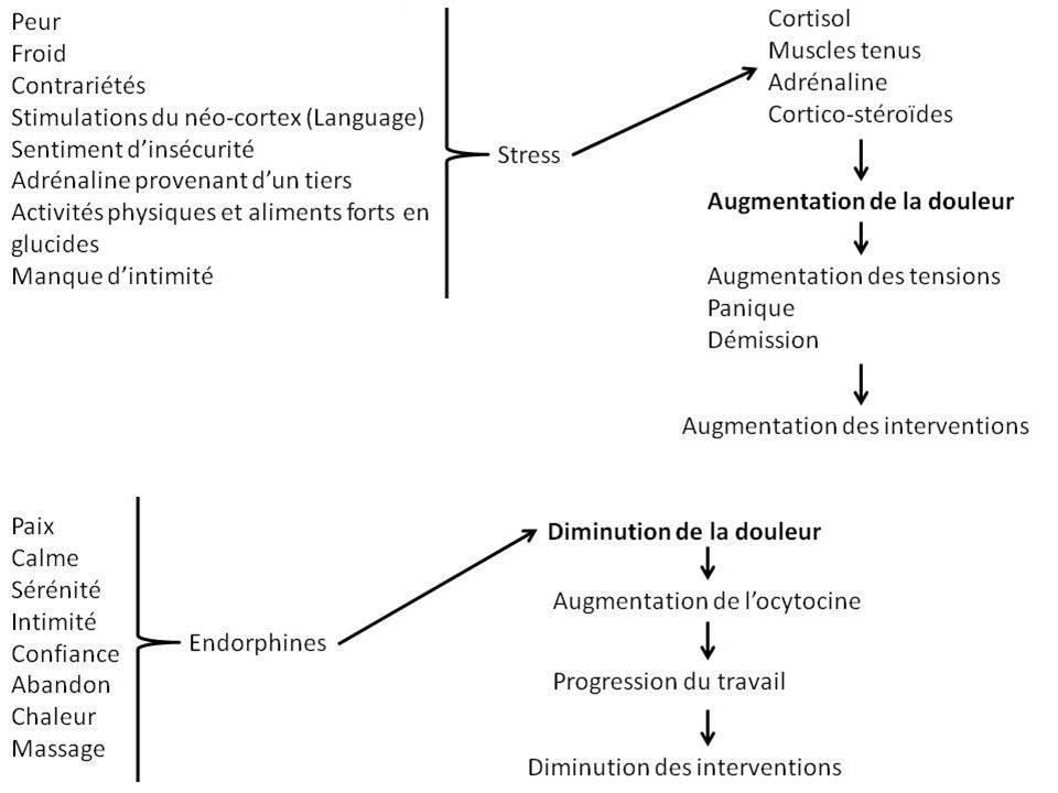 Cycle de la douleur pour l'accouchement
