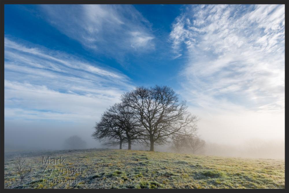 Zytynski_Three_Oaks_in_the_Mist_5274.jpg