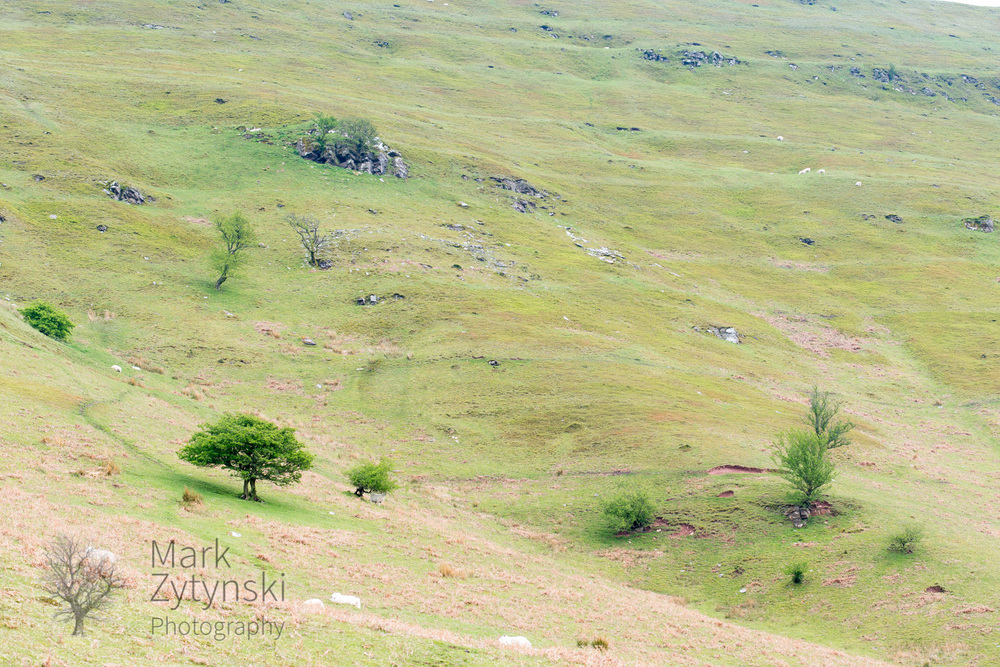 Black Mountains Treescapes Blog #2