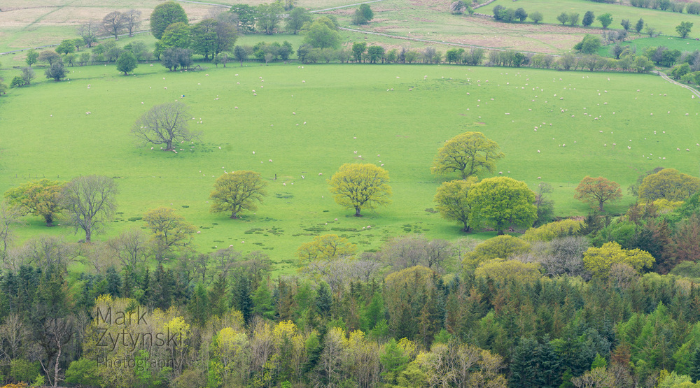 Black Mountains Treescapes Blog #4