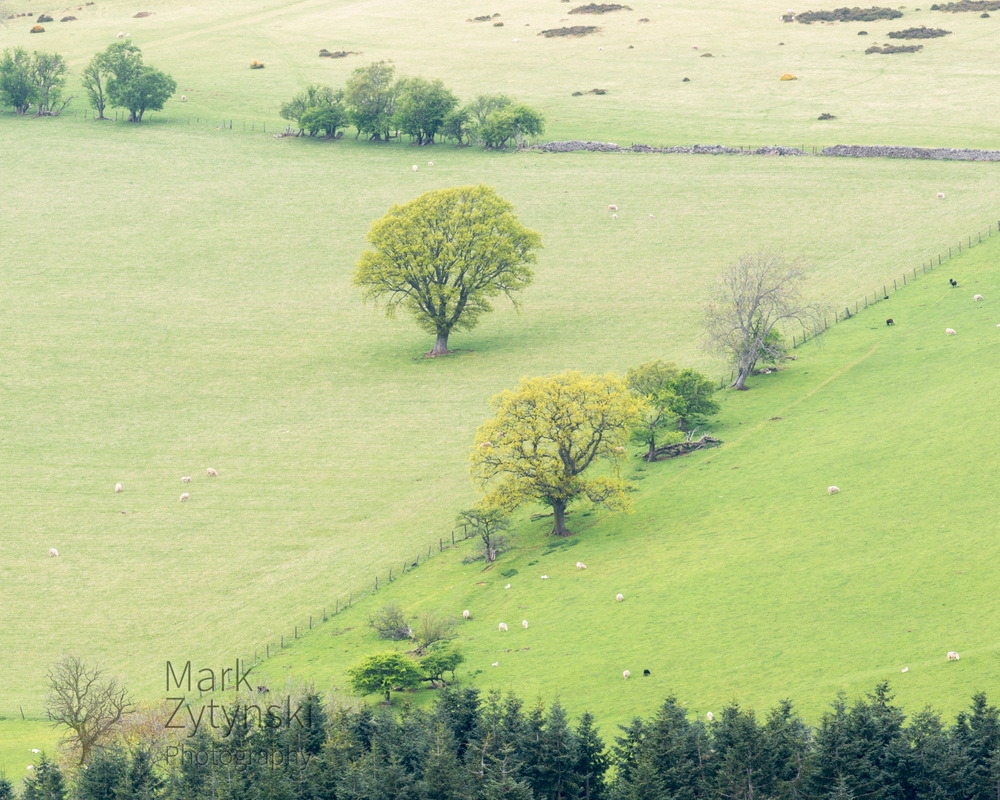 Black Mountains Treescapes Blog #3