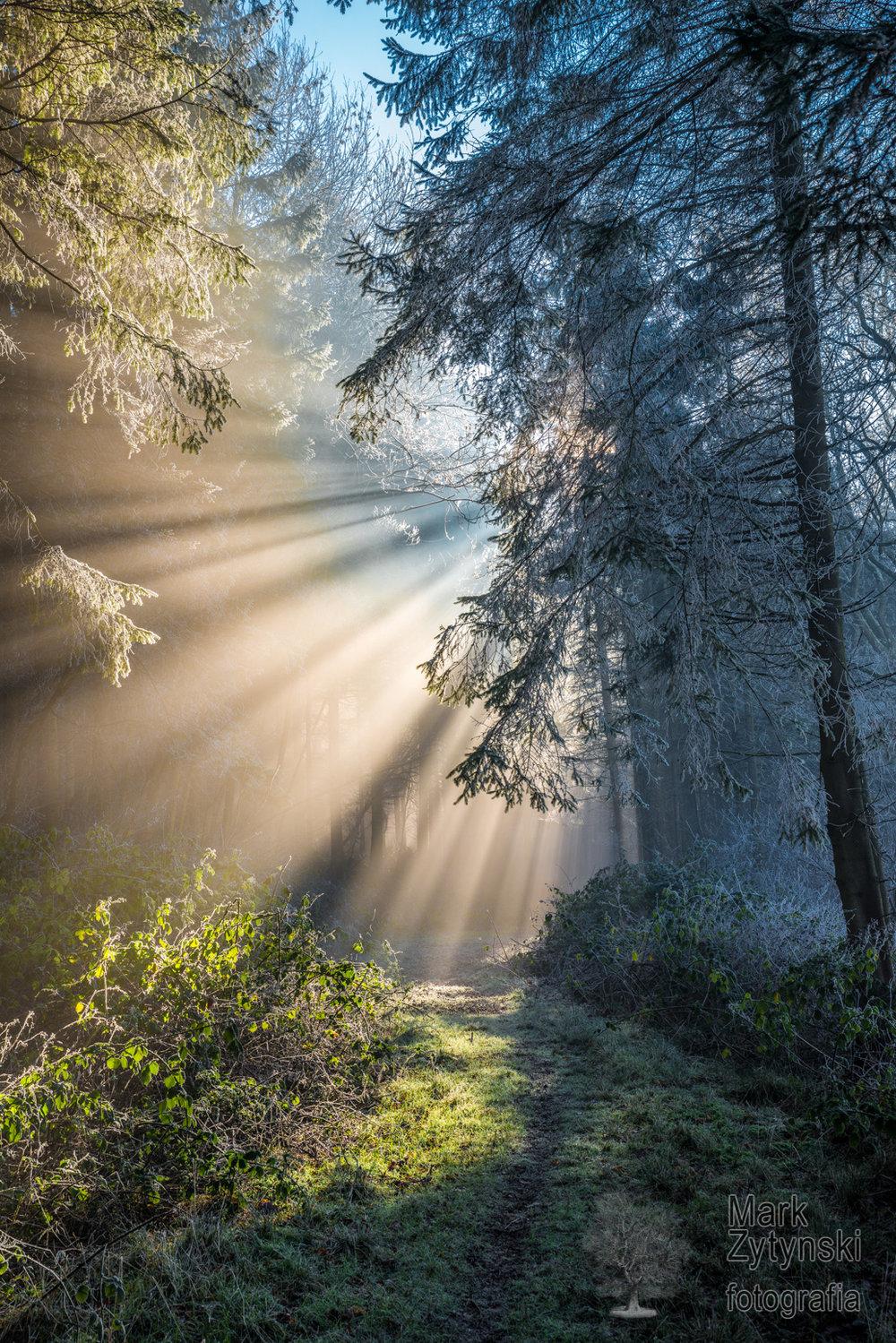 Misty Woodland (04560)