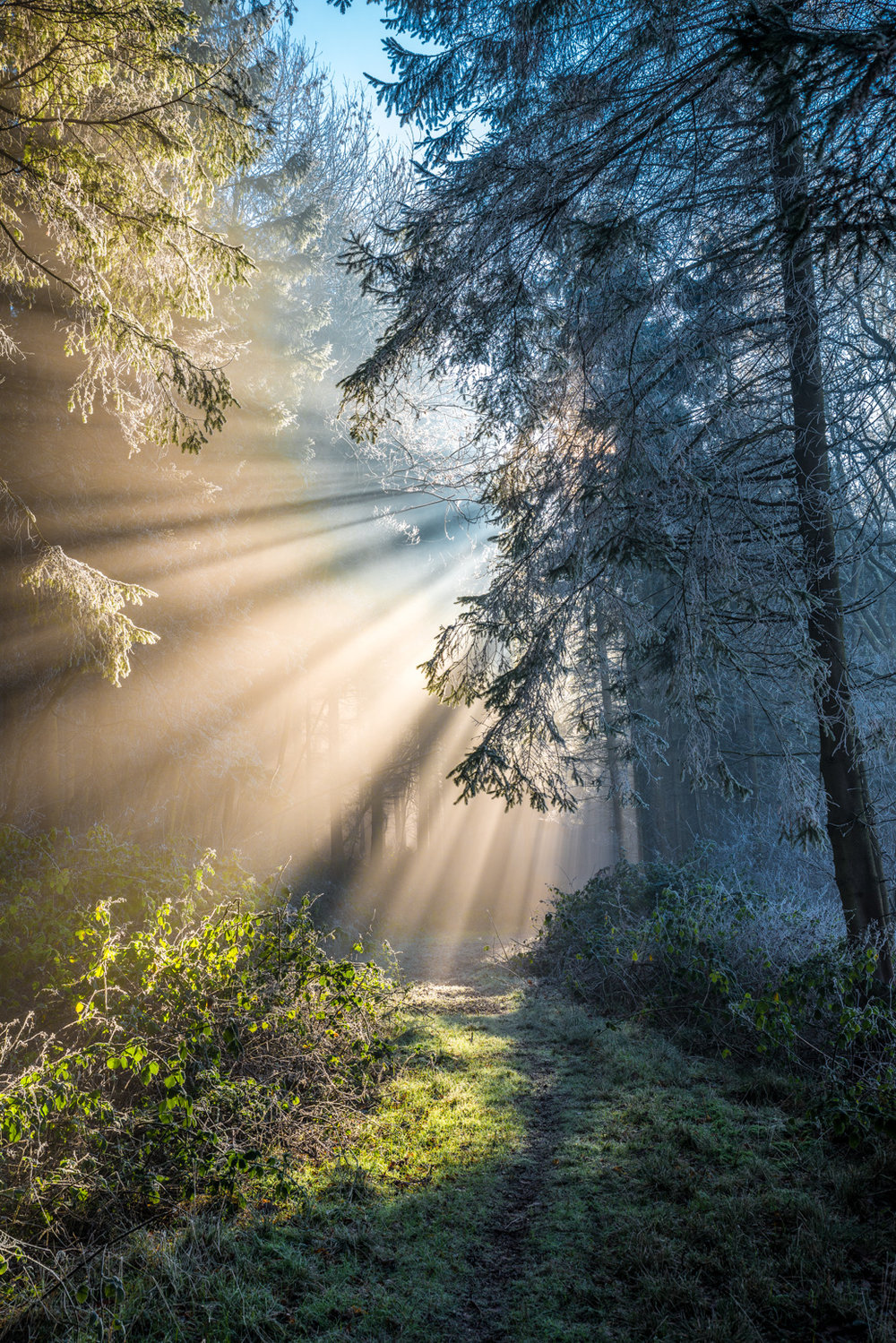 Misty woodland with sun's rays and hoar frost