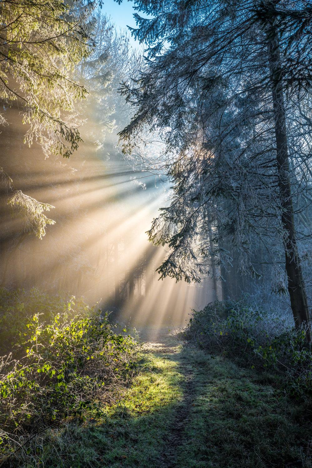 Misty Woodland (04650)