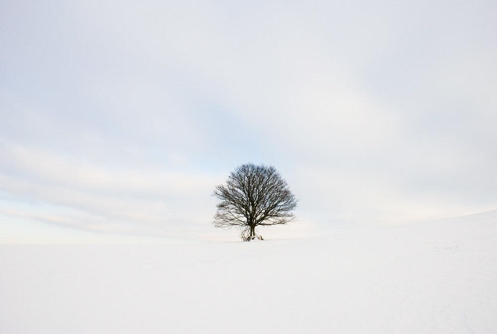 Solitary tree, snow, wintry sky