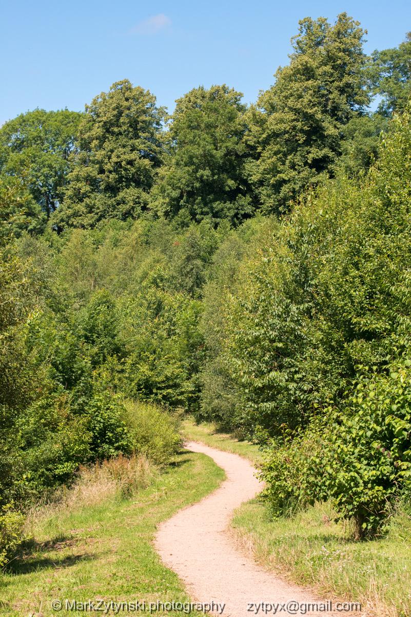 Zytynski-woodland-trust-5274.jpg