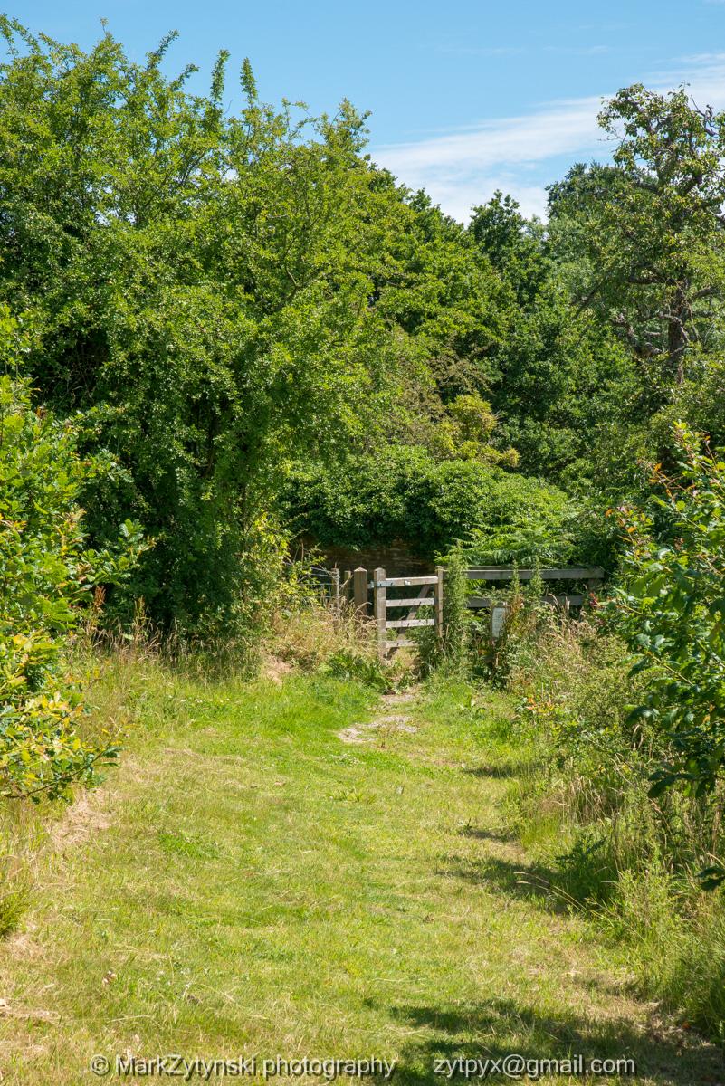 Zytynski-woodland-trust-5470.jpg