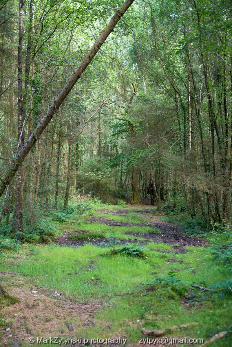 Zytynski-woodland-trust-4693.jpg