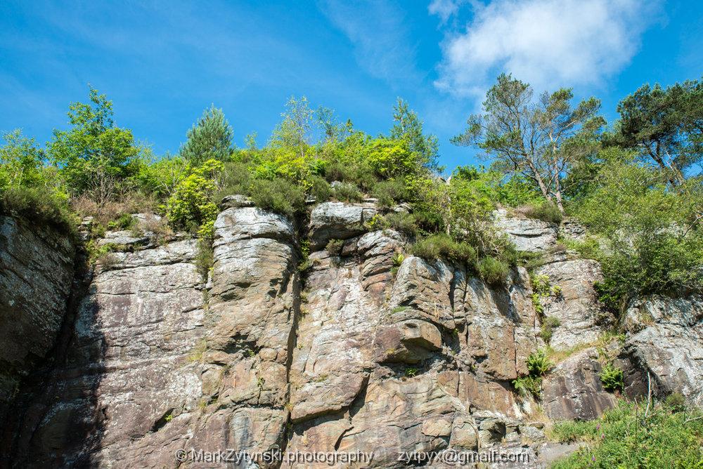 Zytynski-woodland-trust-4752.jpg