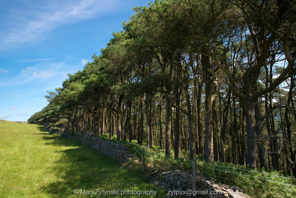 Zytynski-woodland-trust-4885.jpg