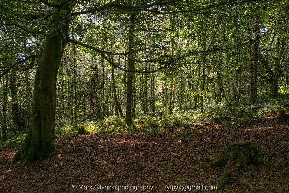 Zytynski-woodland-trust-4938.jpg