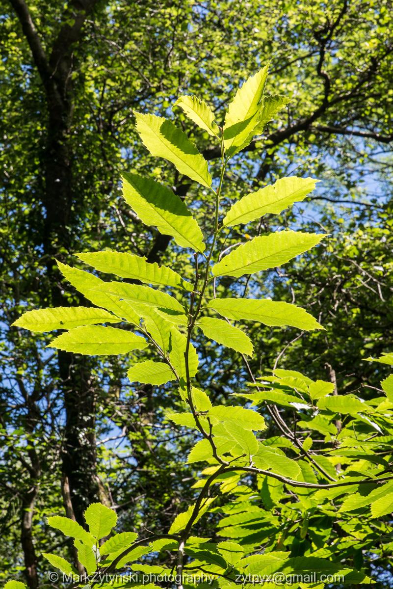 Zytynski-woodland-trust-4942.jpg
