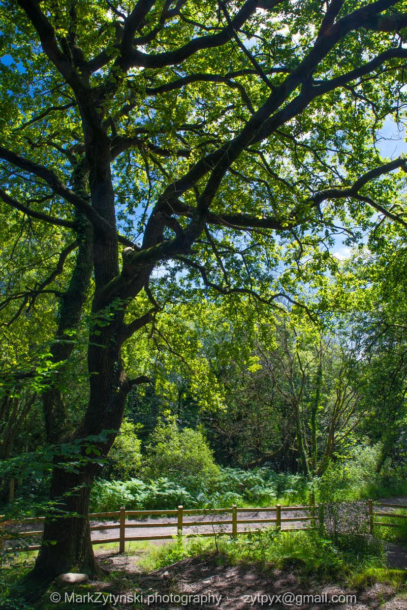 Zytynski-woodland-trust-4951.jpg