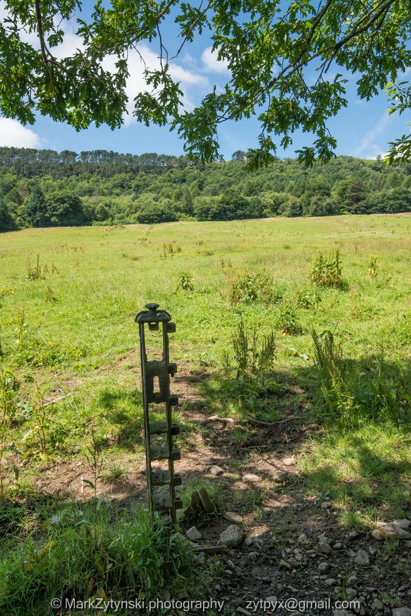 Zytynski-woodland-trust-4989.jpg