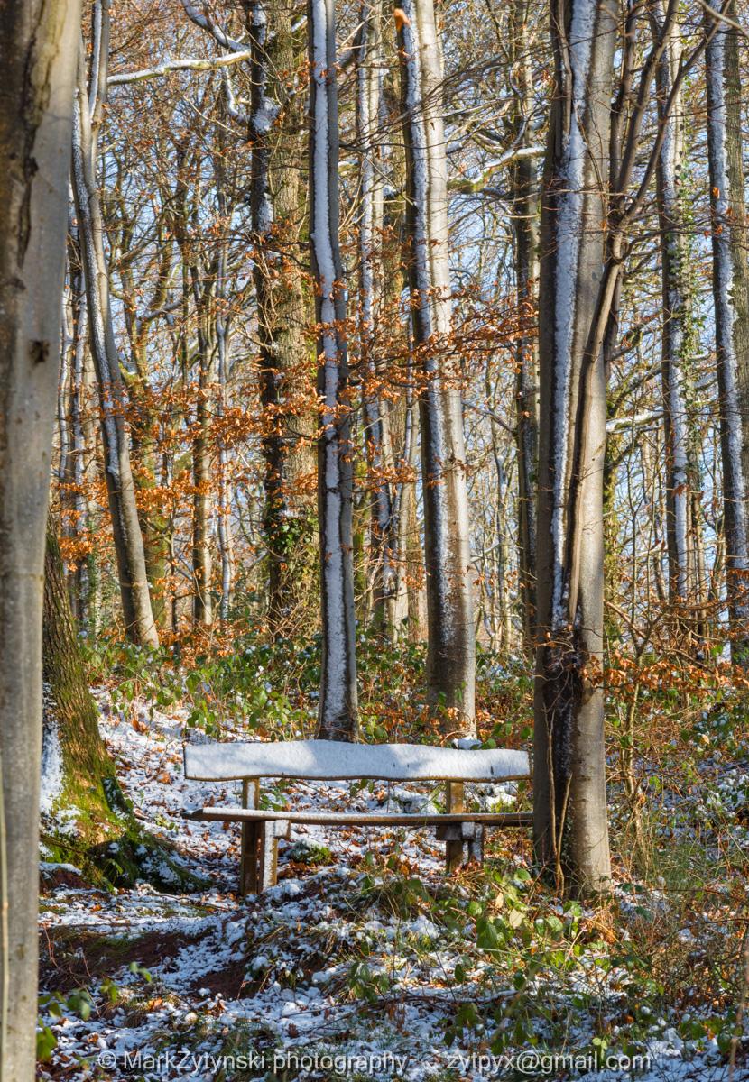 Zytynski-woodland-trust-5399.jpg