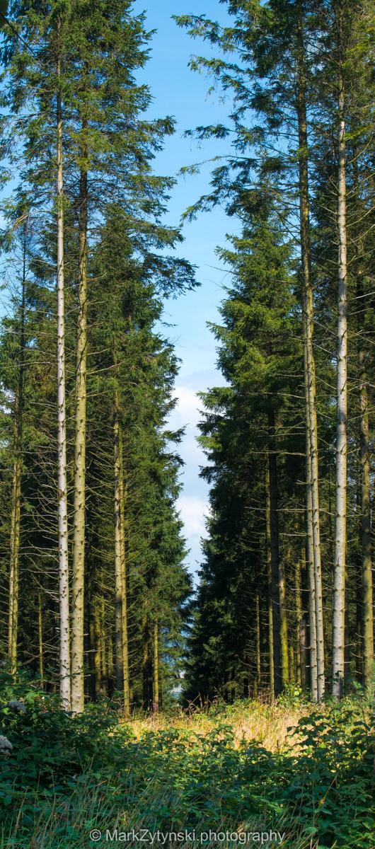 Zytynski-woodland-trust-5601.jpg