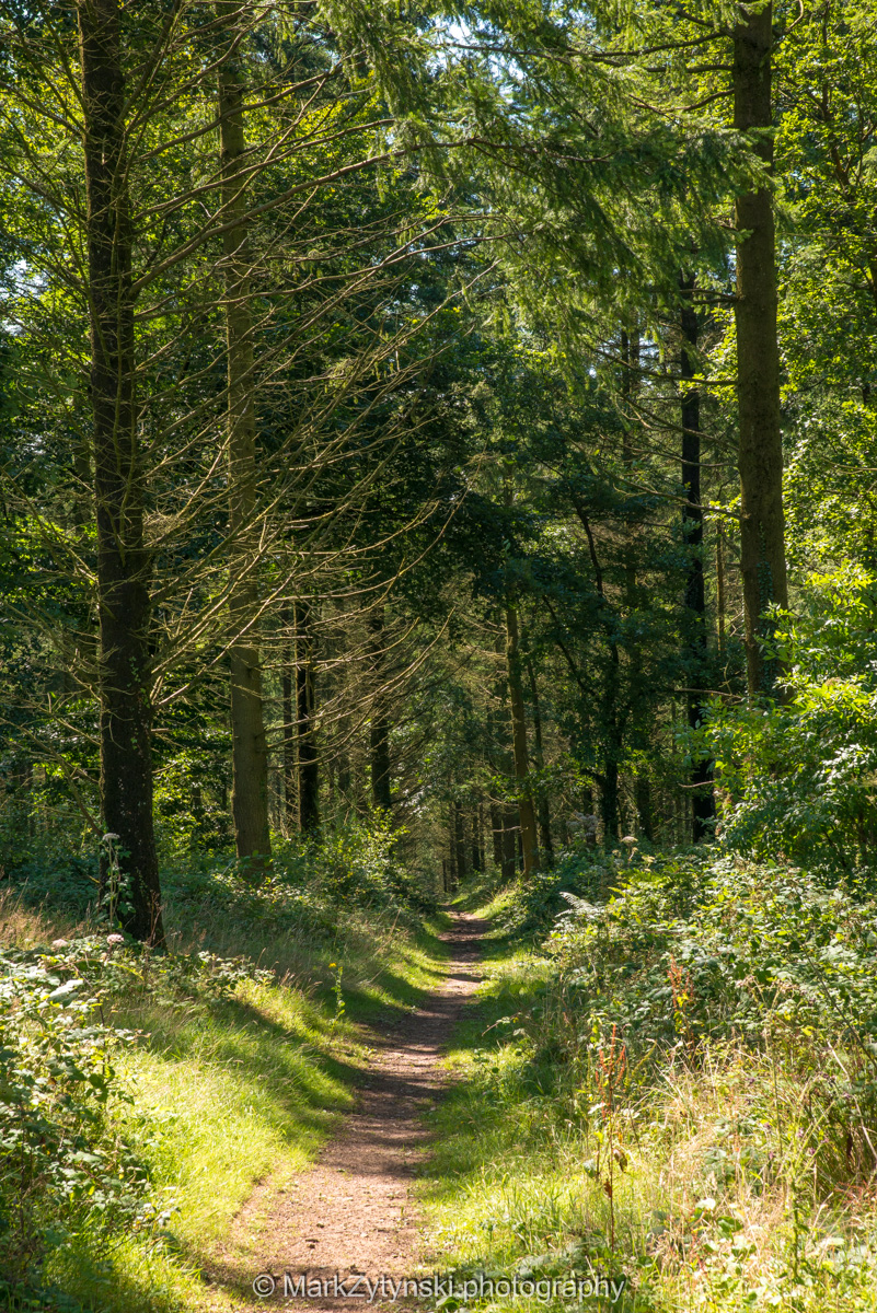 Zytynski-woodland-trust-5644.jpg