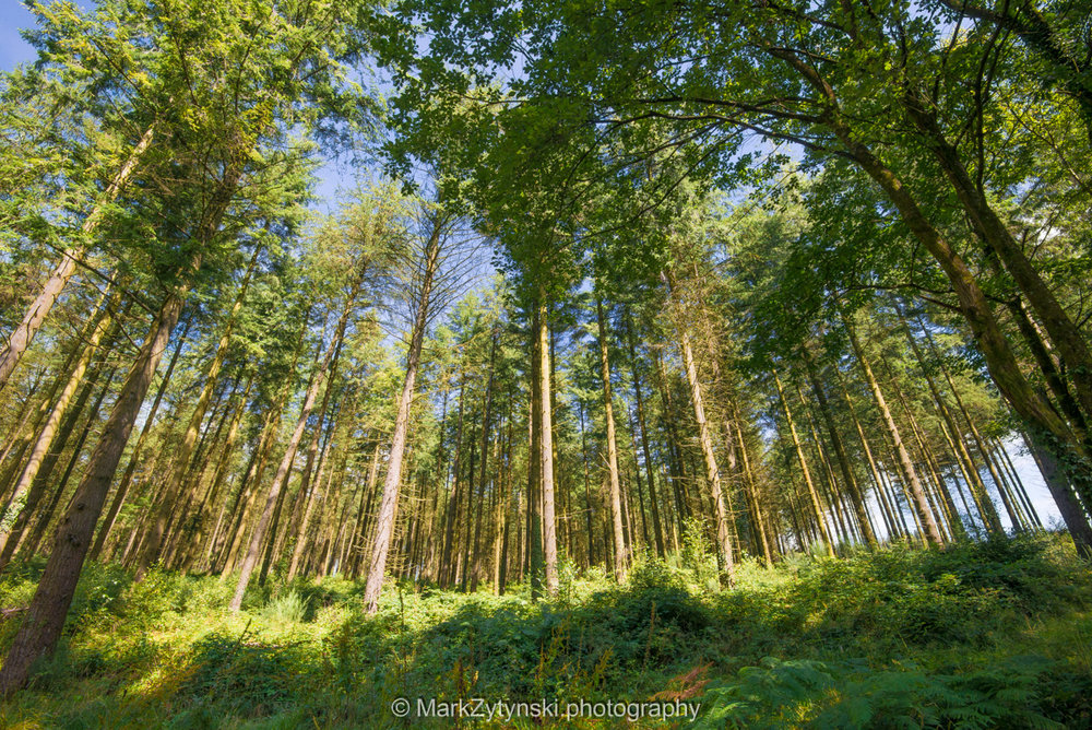 Zytynski-woodland-trust-5663.jpg