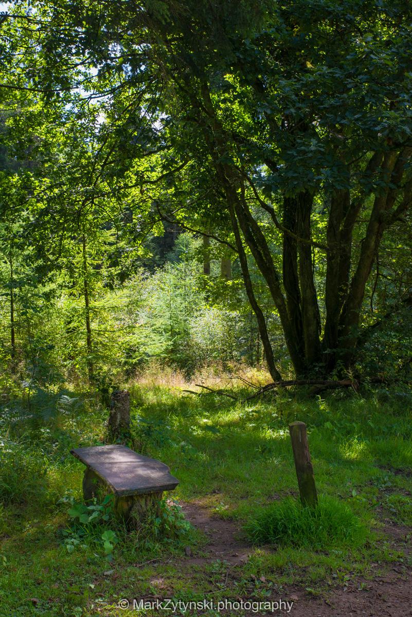 Zytynski-woodland-trust-5692.jpg