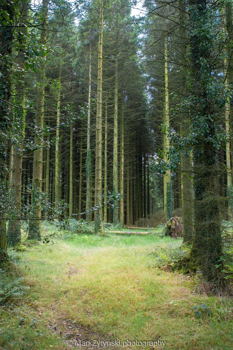 Zytynski-woodland-trust-5753.jpg