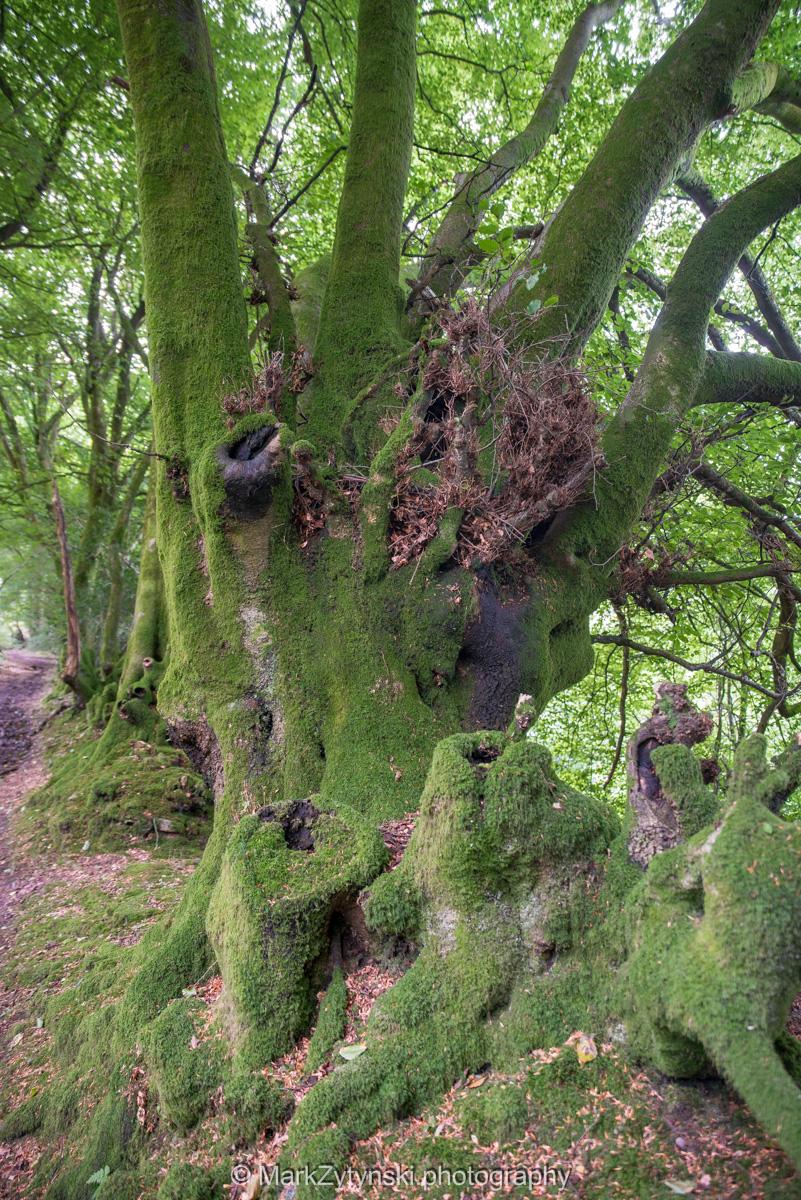 Zytynski-woodland-trust-5805.jpg
