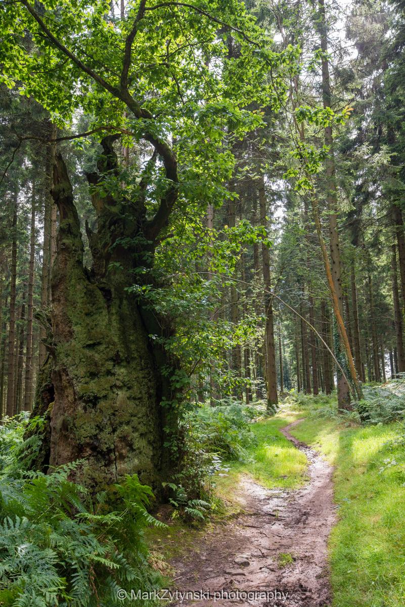Zytynski-woodland-trust-5846.jpg