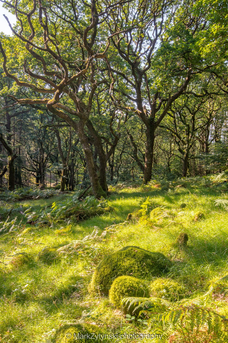 Trees-woodlands-2116.jpg