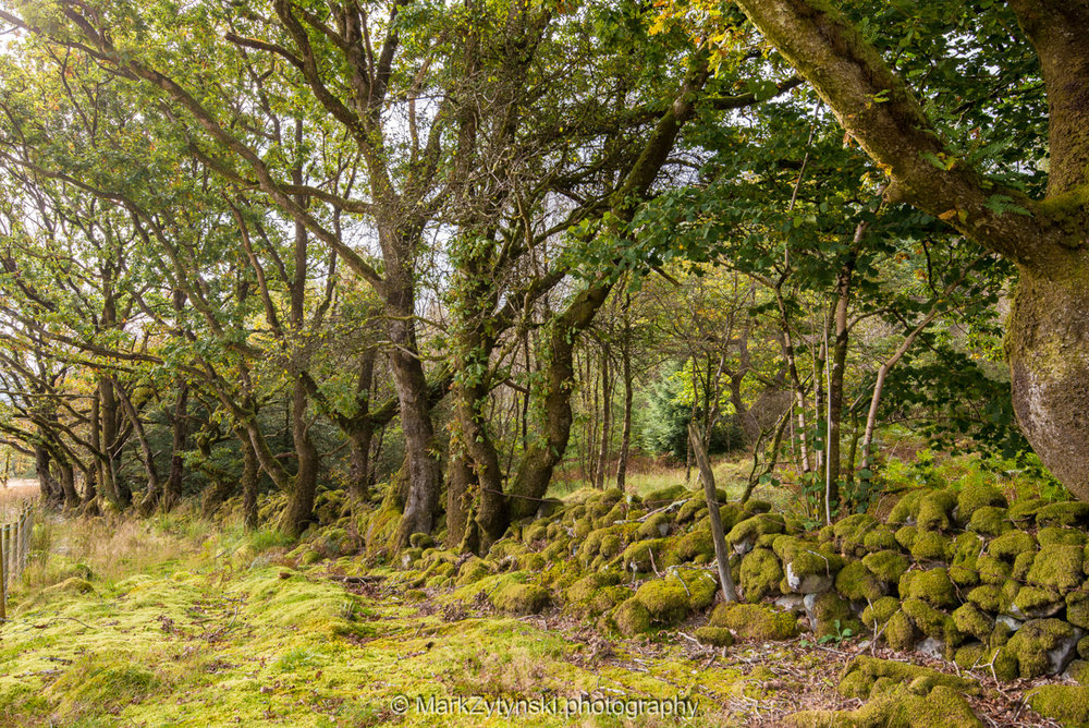 Trees-woodlands-2511.jpg