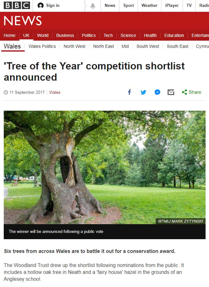 BBC-wales-tree-of-the-year.jpg