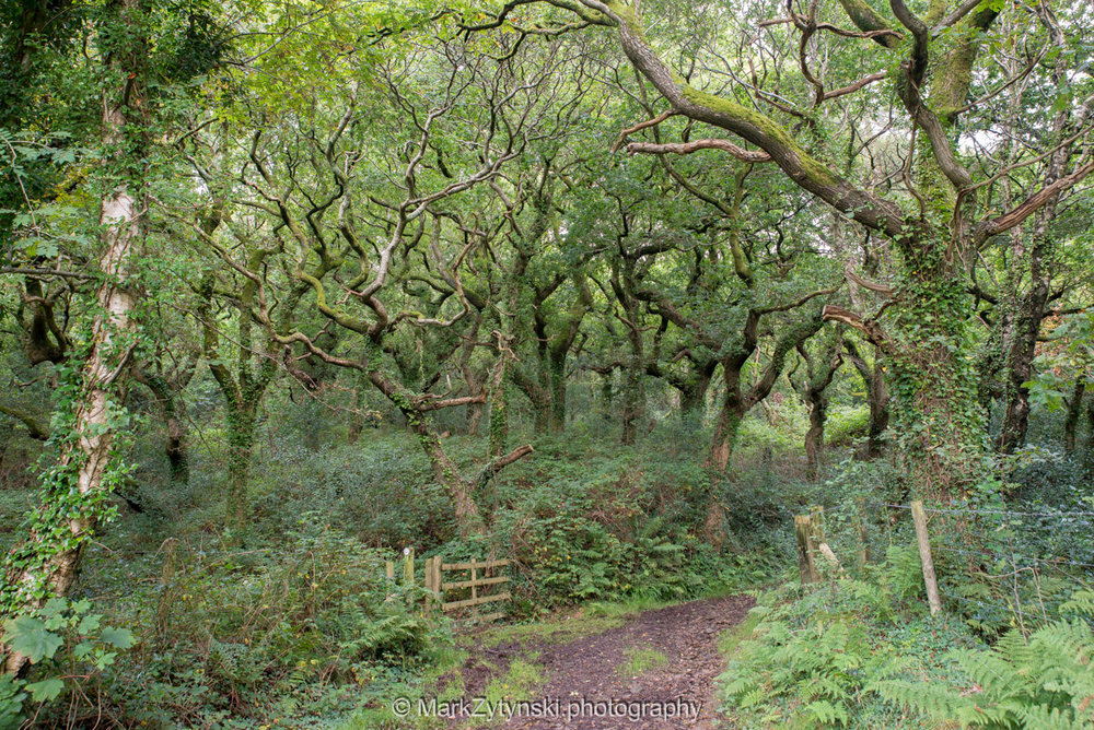 Trees-woodlands-6144.jpg