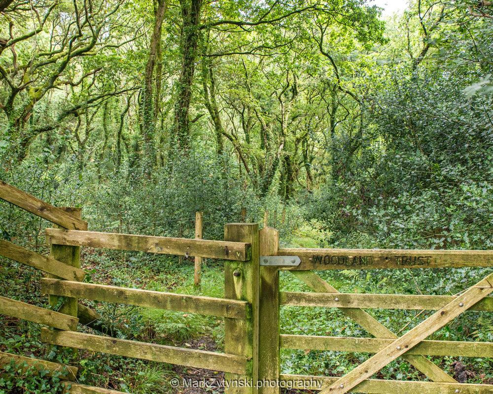 Trees-woodlands-6140.jpg