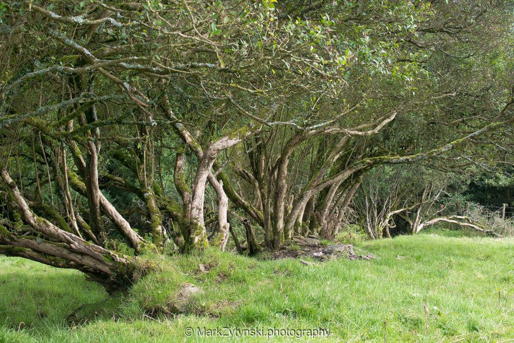 Trees-woodlands-6226.jpg