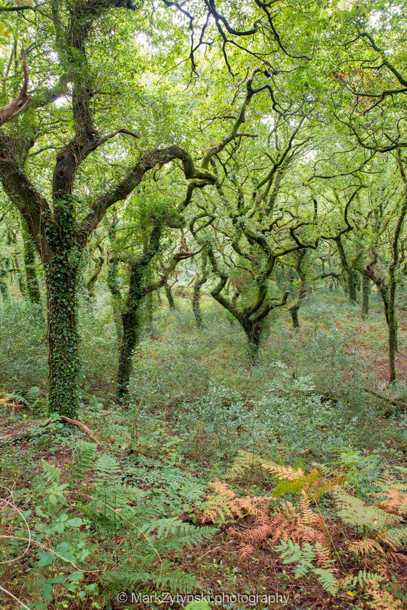 Trees-woodlands-6156.jpg