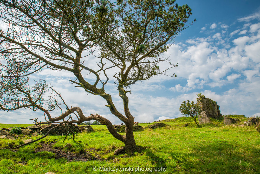 Trees-woodlands-6247.jpg