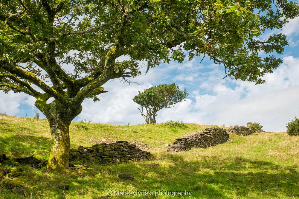 Trees-woodlands-6249.jpg