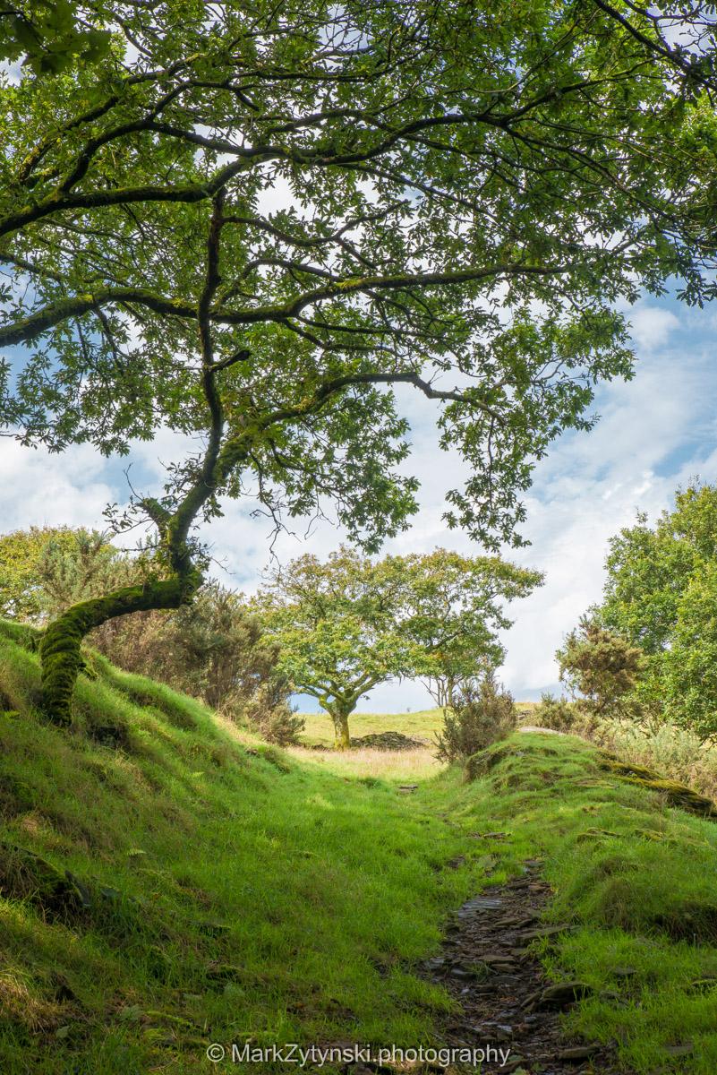 Trees-woodlands-6256.jpg