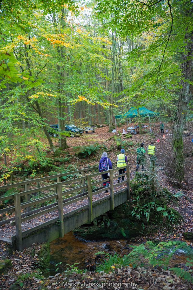 Trees-woodlands-8438.jpg